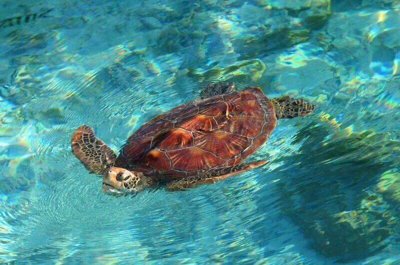 Santuario de tortugas en Bora Bora
